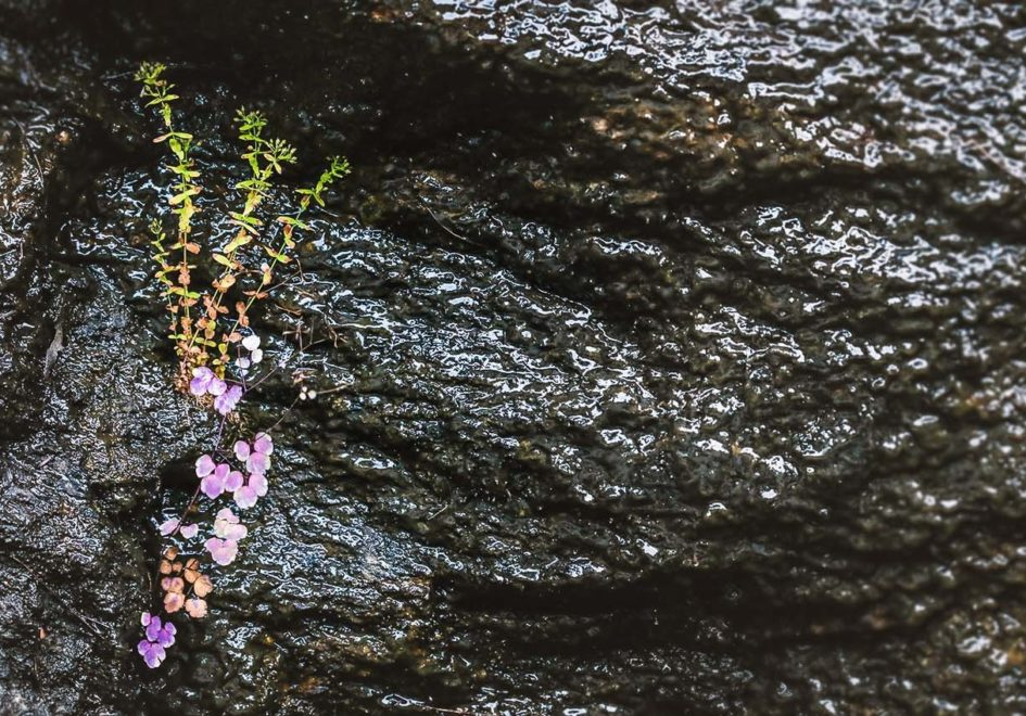 Wild plants cling to the west stone at Bridal Veil Falls.