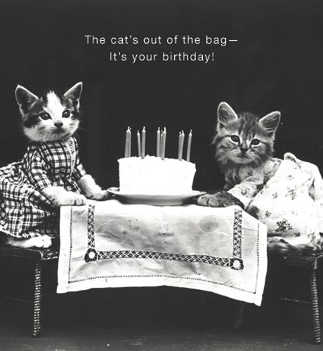 Cats Out of the Bag E-Card