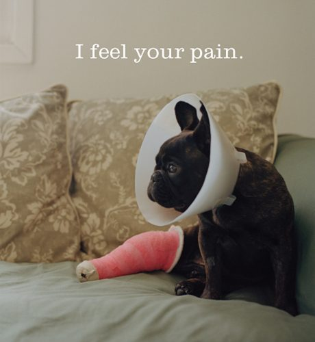 I Feel Your Pain E-Card