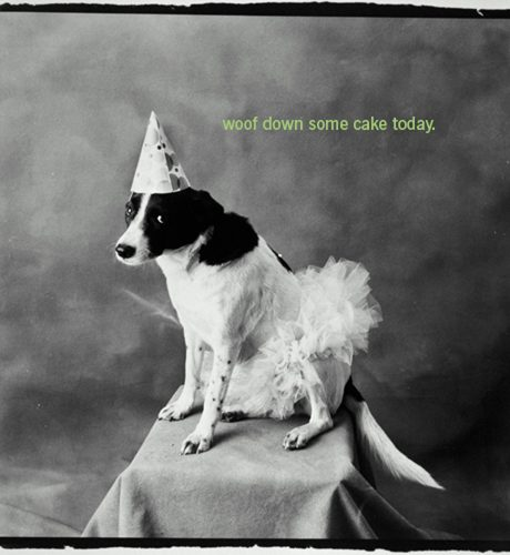 Woof Down Some Cake E-Card