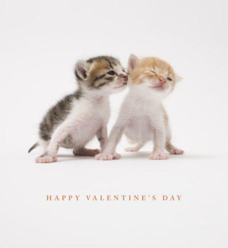 Purrrfect Valentine E-Card