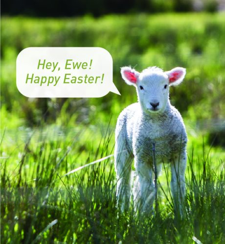 Hey Ewe E-Card